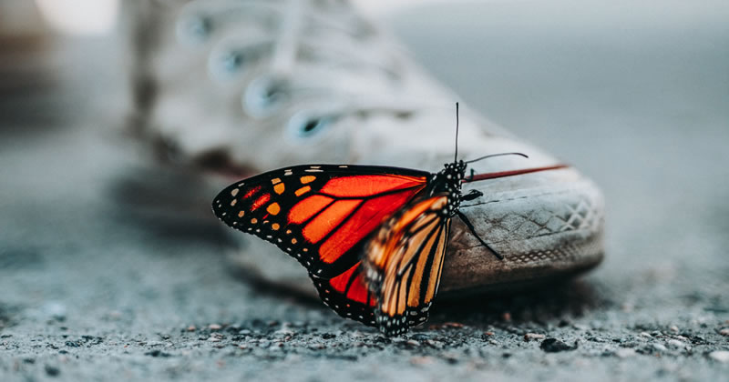 Butterfly on old shoe