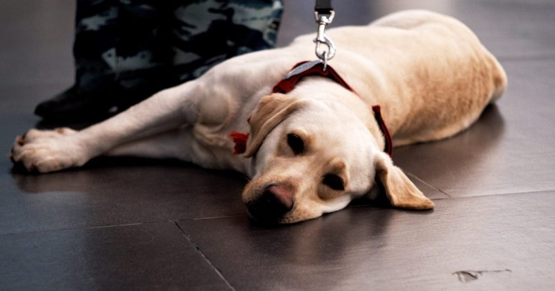 Tired looking dog on leash